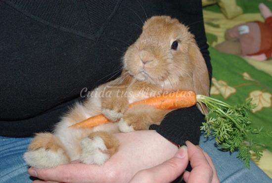 revisión del conejo