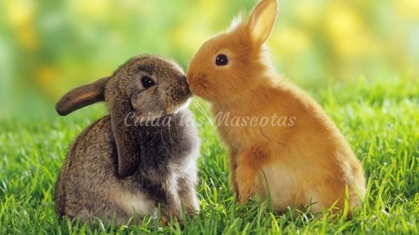 vacunas y desparasitación conejos