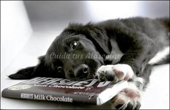 alimentos más peligrosos para perros