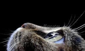 artrofia prograsiva gatos