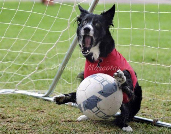 perros deportistas