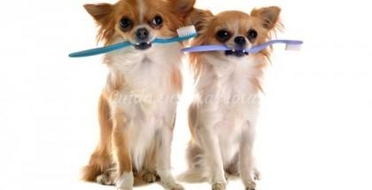 Consejos de higiene para los perros