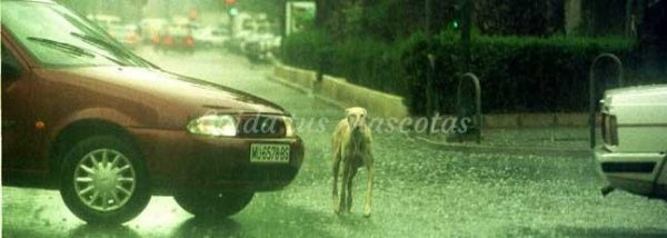 Los accidentes de tráfico y los perros