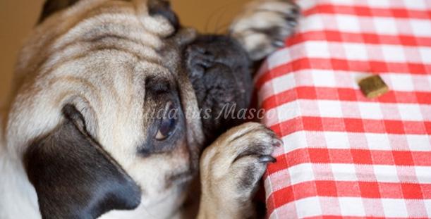 Mitos y verdades sobre los perros
