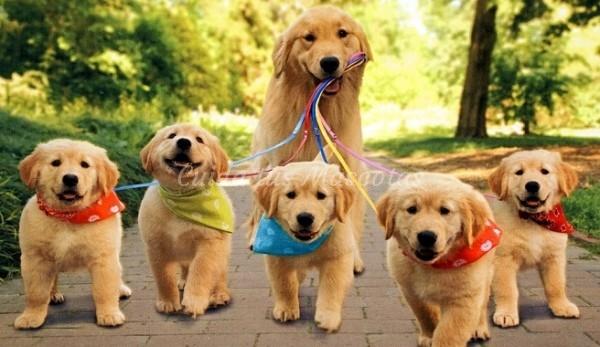 Aprende más sobre la gestación y el parto canino