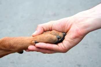 Consejos para adoptar perros