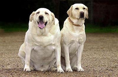 Consejos para evitar la obesidad canina