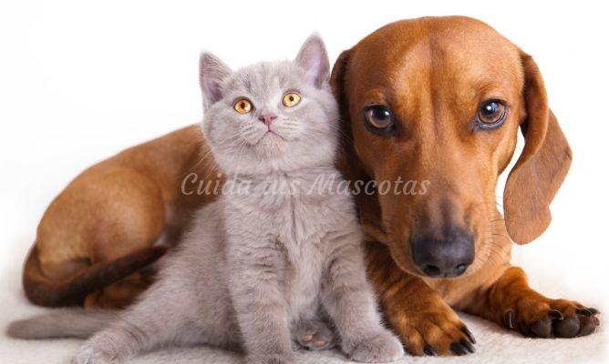 La castración de perros