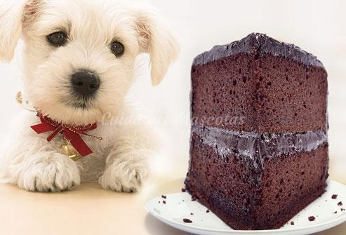 Las intoxicaciones más frecuentes en perros