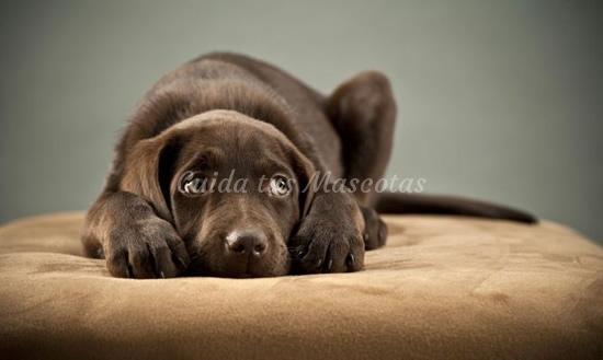 Los requisitos principales para adoptar perros