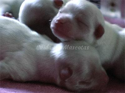 Cómo criar a un cachorro huérfano