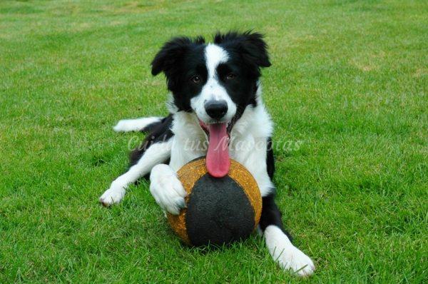 Cómo proceder frente a la intoxicación de una mascota