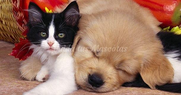 La ascaridiasis canina