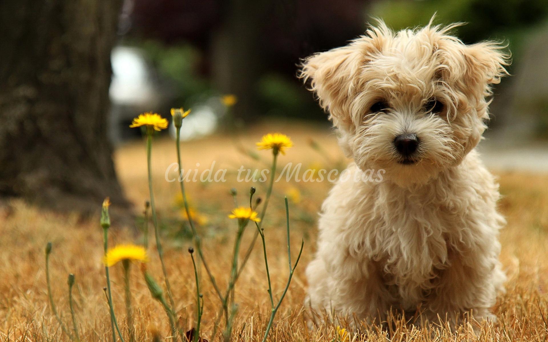Tipos de cáncer de piel en perros