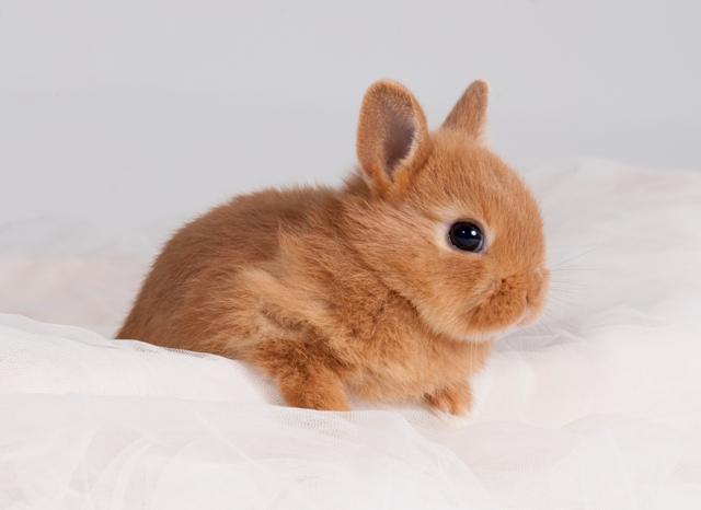 El conejo enano y su comportamiento