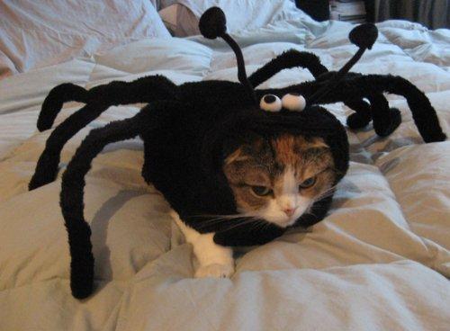 Evitar que mi gato arañe los muebles