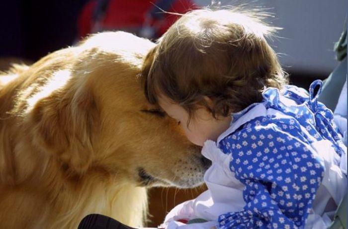 Mi perro y la llegada de un bebé