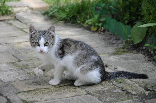 Razones por las que los gatos se escapan