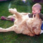 relacion perro bebe