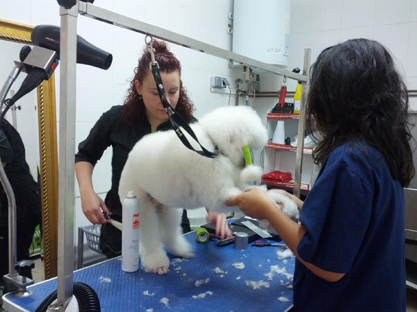 curso peluqueria canina en Barcelona