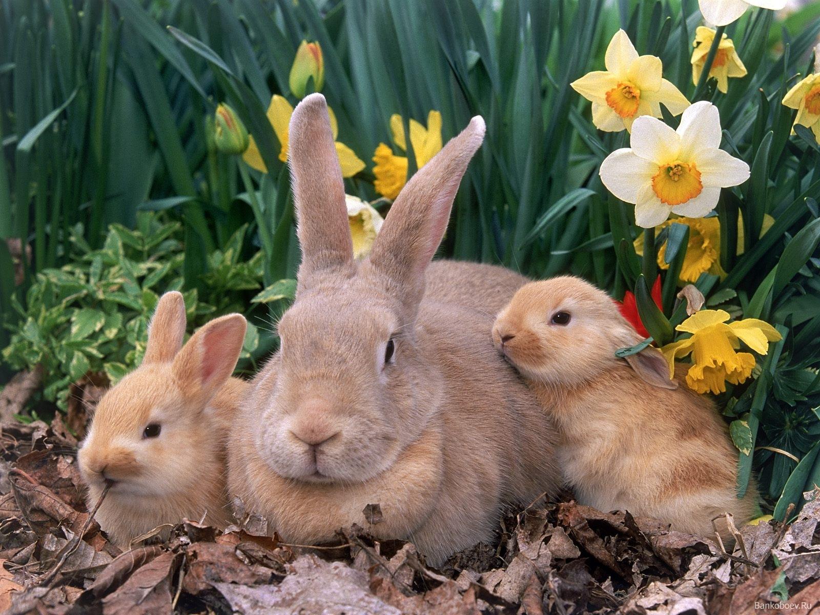 Las principales enfermedades de los conejos