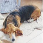 acupuntura para perros