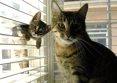 educar a los gatos