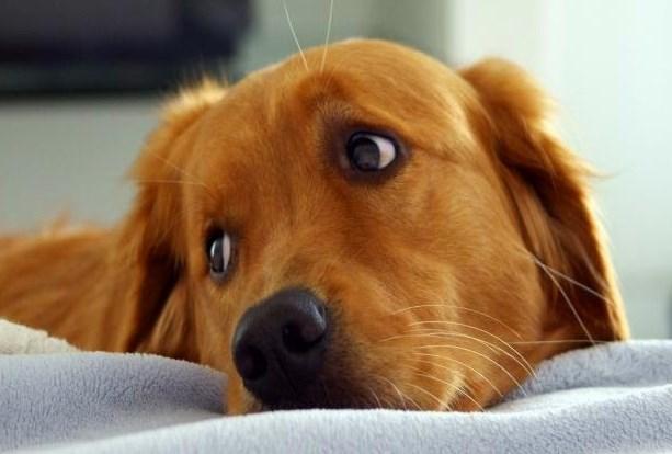 ¿Los perros nos escuchan