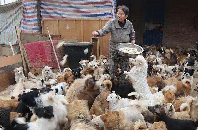 Perros en China