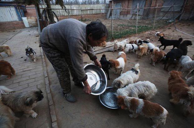 Mujeres cuidan perros callejeros en China