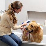 como dar un baño a tu perro