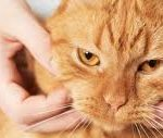 masajes para gatos