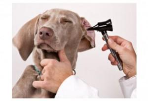 perro es sordo