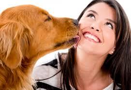 saliva de los perros