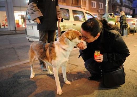 Amor entre perros y dueños
