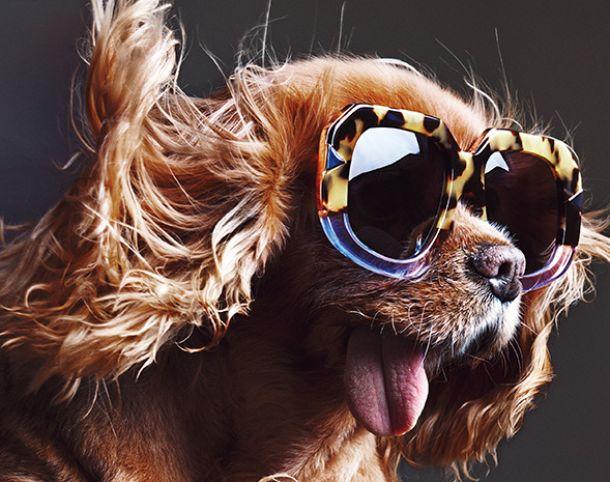 El perro que pasó de ser mascota a modelo