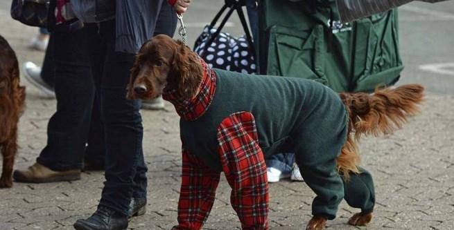 Londrés quiere multar a los perros que dejan caca en la vereda