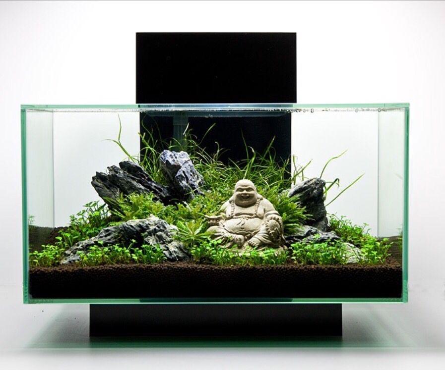 acuario feng shui