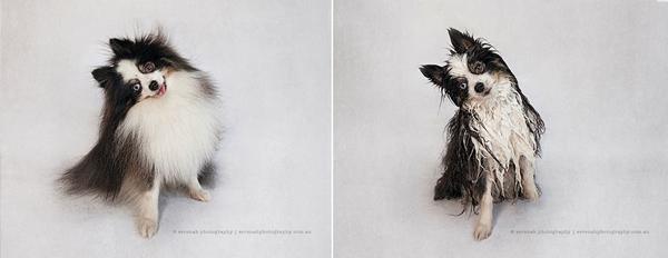fotos de perros mojados y secos 2