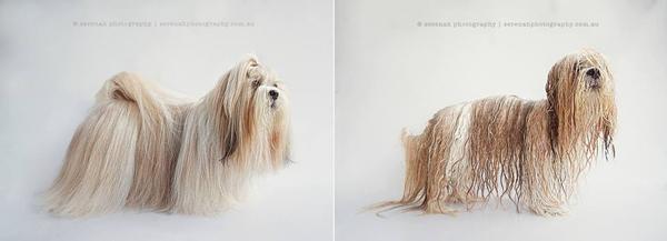 fotos de perros mojados y secos 7