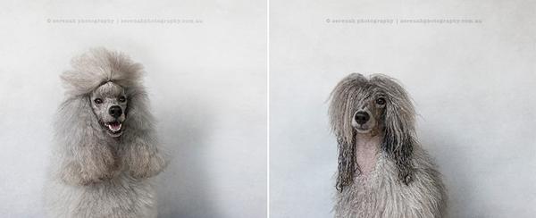 fotos de perros mojados y secos 9