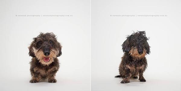 fotos de perros mojados y secos