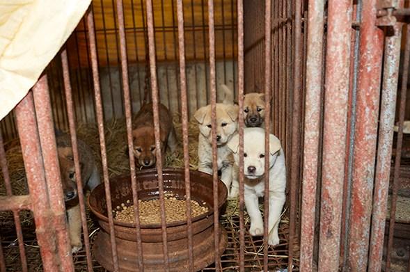 perros en Corea del Sur como alimento
