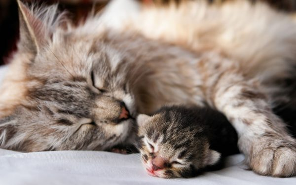 Esterilización de gatos b