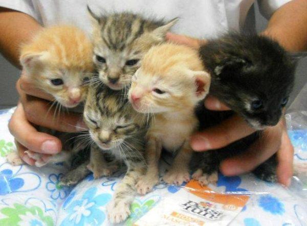 Esterilización de gatos c