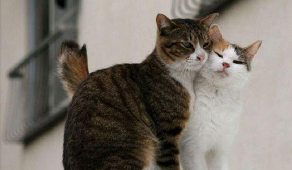 Leucemia en gatos d