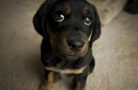 Sentimientos de los perros son parecidos a los de los humanos
