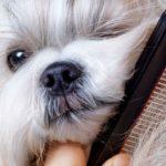 Cuidados del pelaje del perro