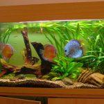Cuidados de Aquarios