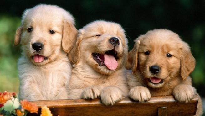 comprar un perro